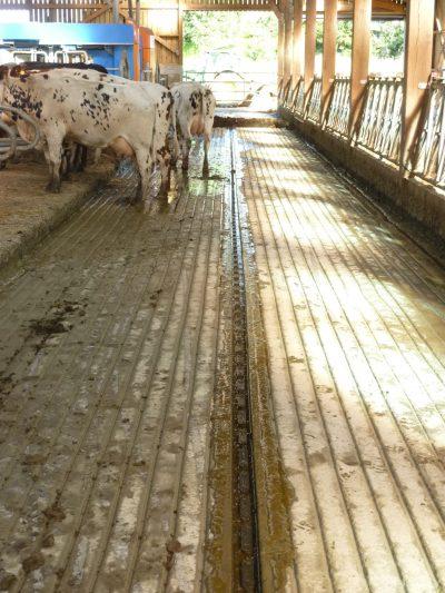 Rainurage dalle béton d'un sol de bâtiment d'élevage bovin-P1020203