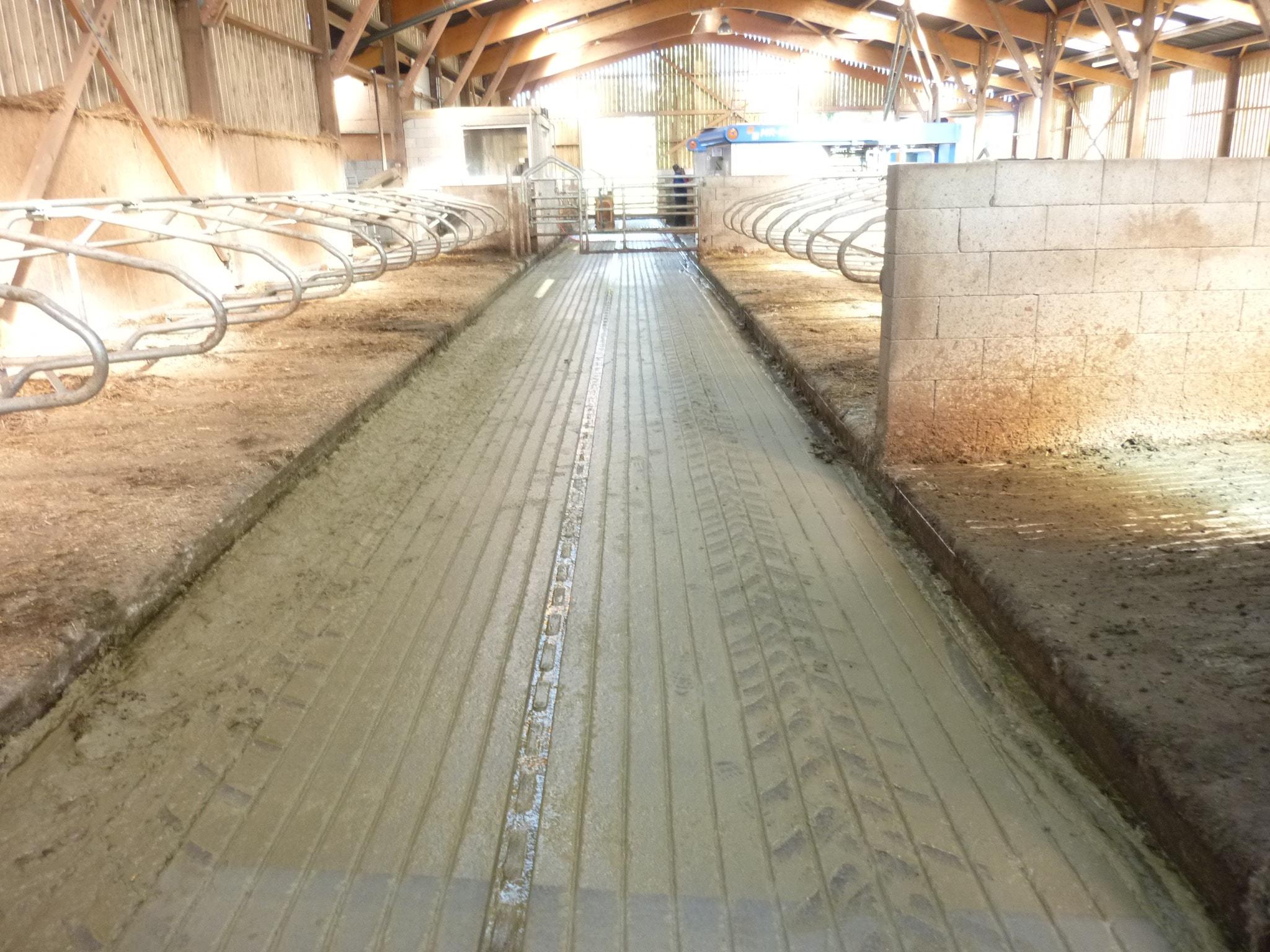 rainurage du béton - un sol anti dérapants pour stabulation bovin