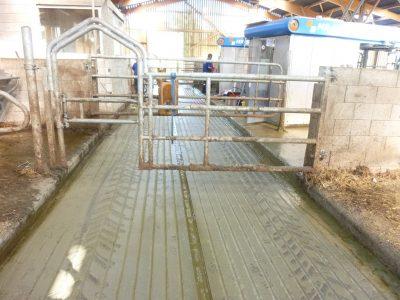 Rainurage agricole béton - Stabulation -P1020205